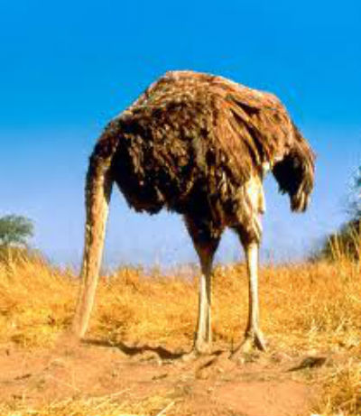 Do You Have an Ostrich in Your Family?