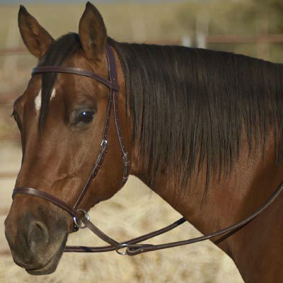 Chiropractic Care For Your Horse