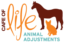 Animal Chiropractic, IVCA Certified