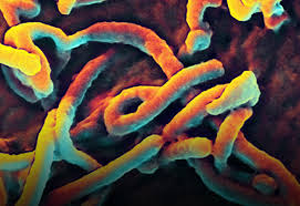Ebola, Flu & Medical Errors