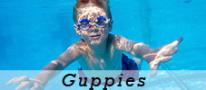 Five Star Aquatics Swim School
